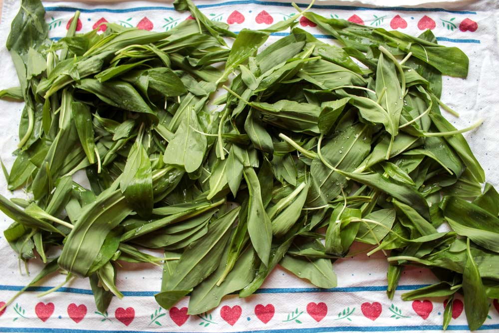 How to preserve wild garlic?
